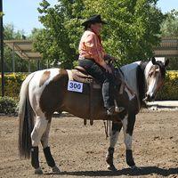 QTsGold Mastercard | 2003 Buckskin Homozygous Tobiano Stallion