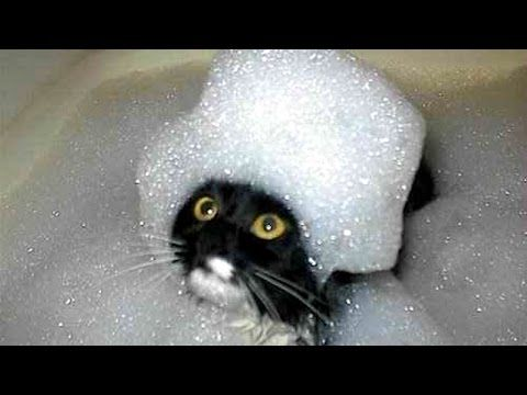 The funniest and most humorous cat videos ever! - Funny cat compilation