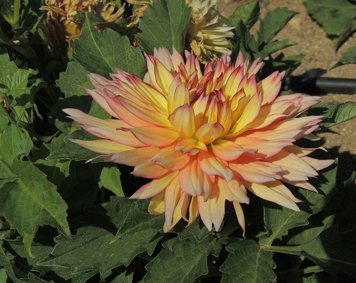 Para conocer más sobre plantas bulbosas y tuberosas visita: http://www.elhogarnatural.com/Bulbosas.htm