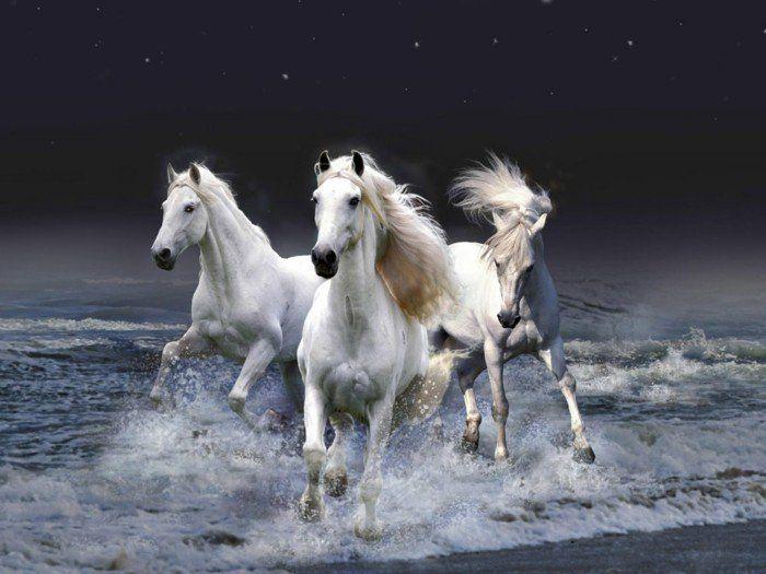 sch ne pferde bilder sch n aussehende pferde lifestyle pinterest pferd bilder sch ne. Black Bedroom Furniture Sets. Home Design Ideas