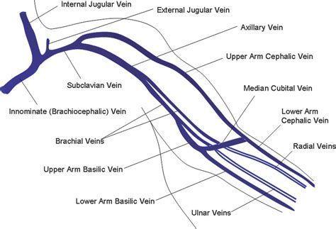 Image Result For Ultrasound Upper Extremity Venous Anatomy Doppler