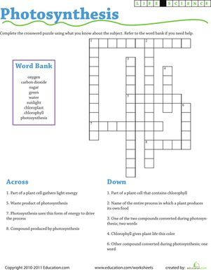 Image result for photosynthesis worksheet elementary school ...