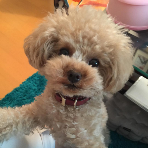 This little fluffer has more volume than us mortals could ever dream of. | 18 Pets That Will Make You Want To Get A Perm