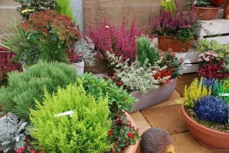 piante ornamentali invernali da esterno - Cerca con Google | Piante ...