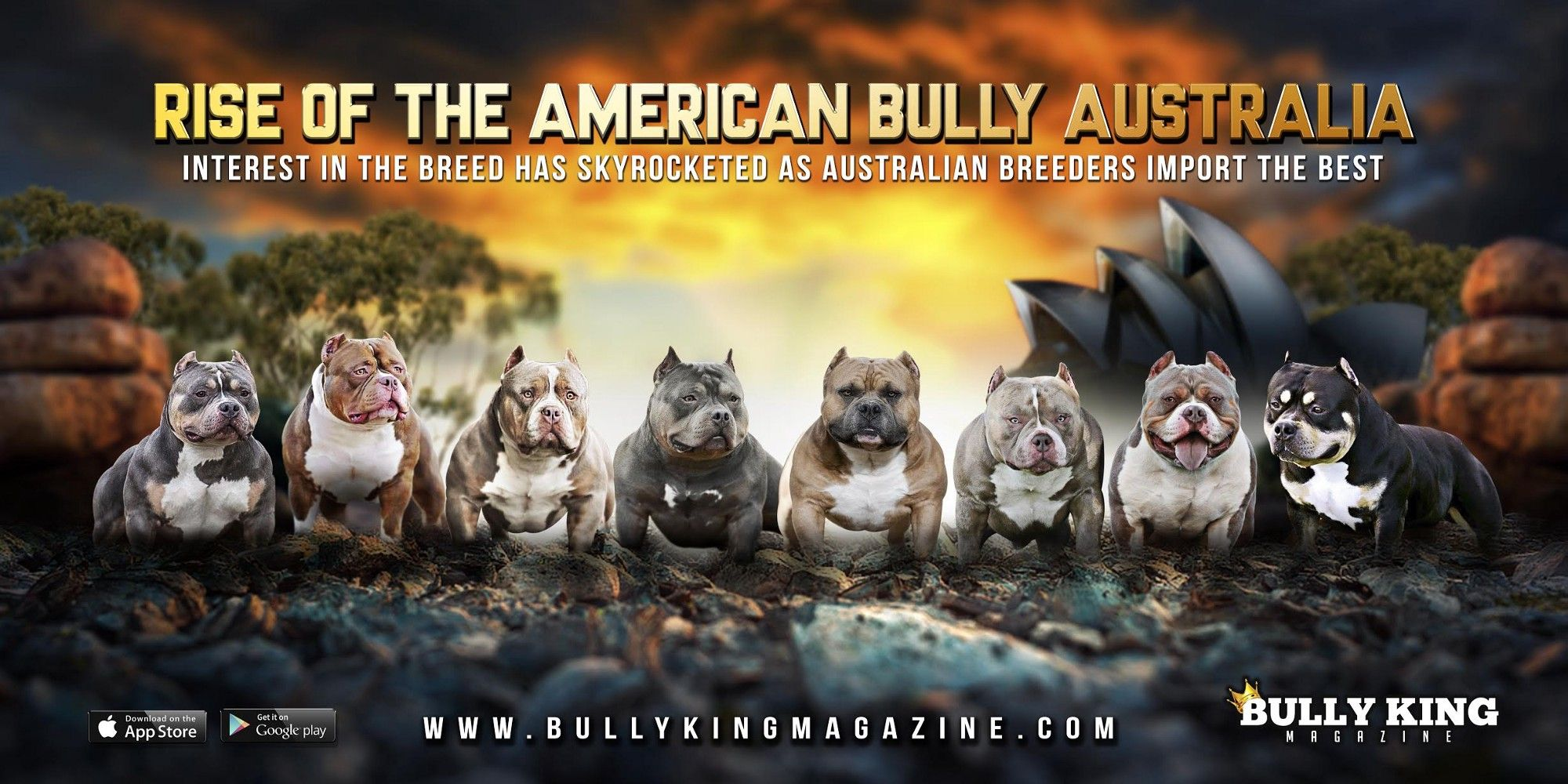 Let S Start This Out By Stating That As A Magazine Bully King Supports All Of The Bully Breeds Along With Their Various C In 2020 American Bully Bully Breeds Bullying