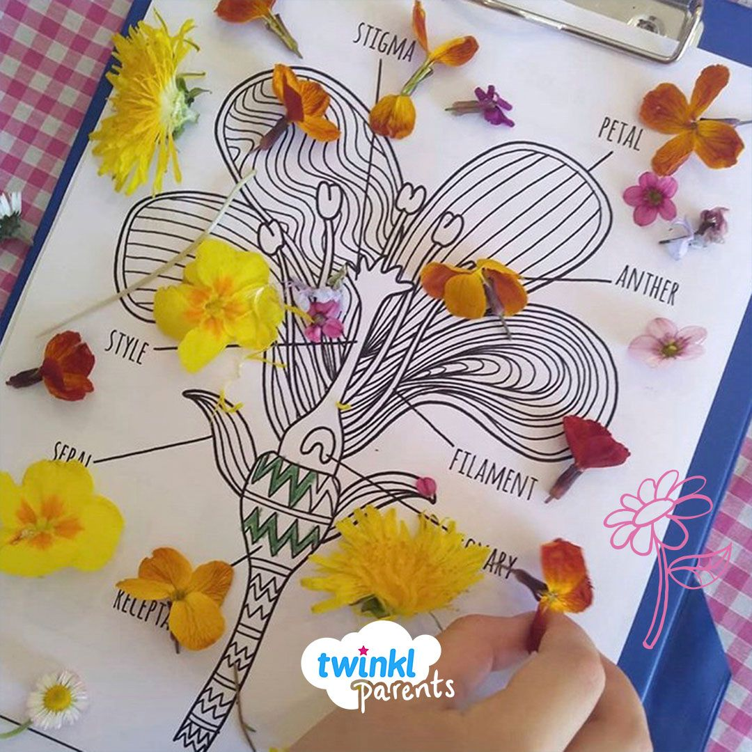 Labelling Parts Of A Flower In