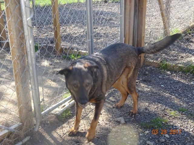 Adopt Bonnie On Dog Search German Shepherd Dogs Dogs