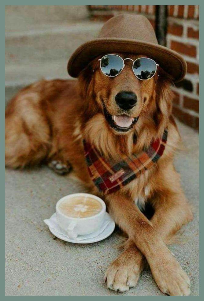 Photo of Estilos de perrito Peluquería canina | estilo perrito | Consejos para la preparación del perro »Wiki Ùtil ¿Por qué mis podadoras no cortan mi do …