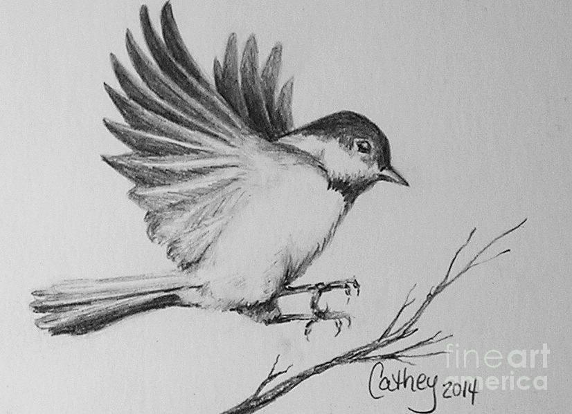 Bird Drawing - Chickadee by Catherine Howley   Bird ... - photo#10