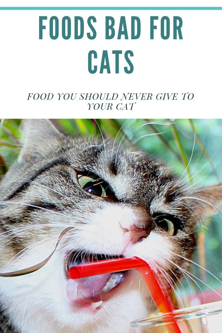 Foods Bad For Cats Food You Should Never Give To Your Cat