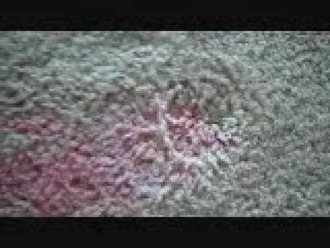 Just Removed An Old Fruit Punch Stain From My Carpet Something That Finally Works Fruit Stain How To Clean Carpet Carpet Stains
