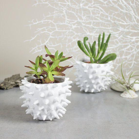 Mini Planter White Spiky Urchin Bowl Ceramic by blueroompottery