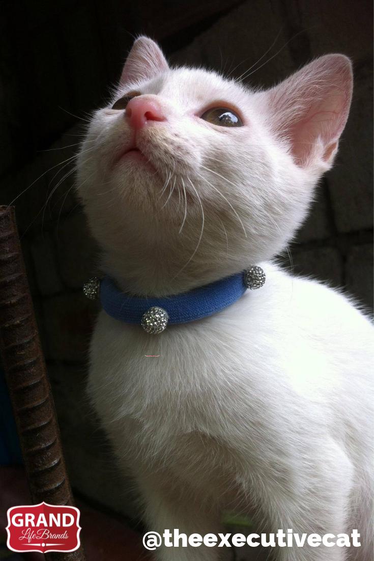 Does Your Cat Pee Smell So Bad Grandlifebrands Best Odor Eliminators Cat Pee Smell Cat Care Cat Urine