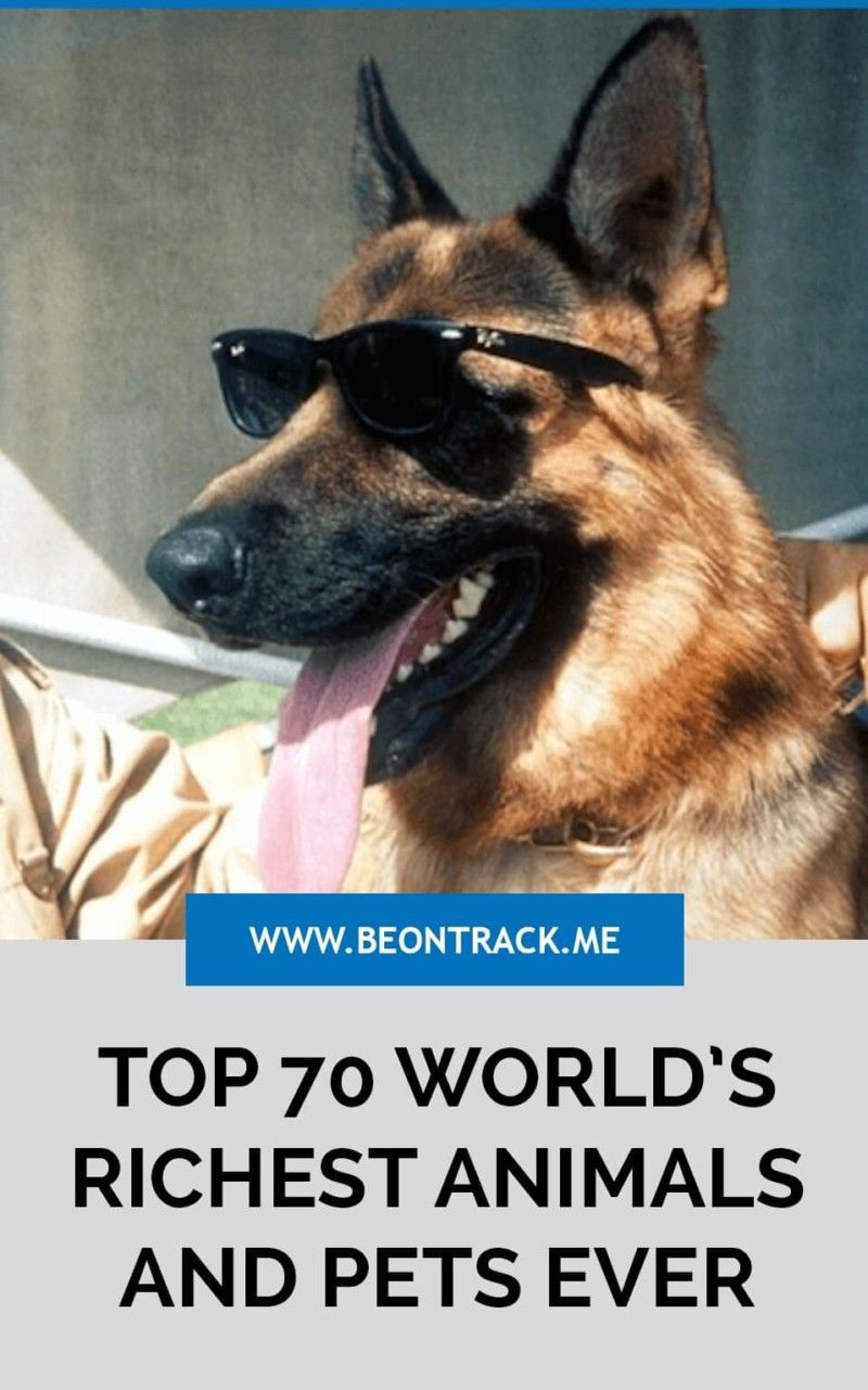 Top 70 World S Richest Animals And Pets Ever Rich Dog Animals And Pets Pets