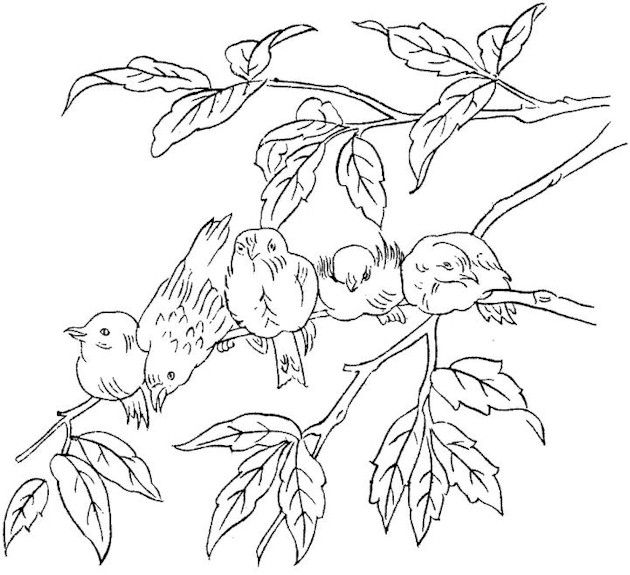 coloring pages for adults only adult coloring pages printable coupons work at home free coloring - Printable Coloring Pages Birds