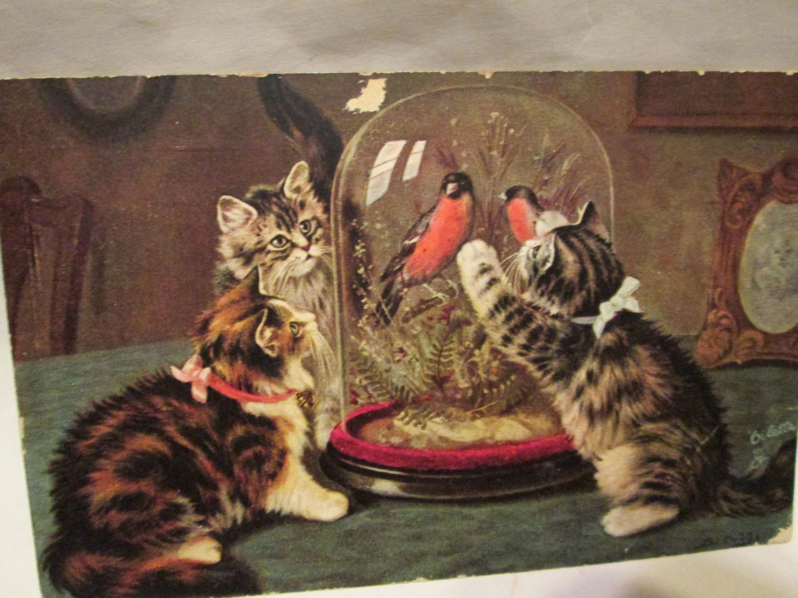 Vintage 1906 Post Card of Three Cats Trying to Get Two Birds in A Cage | eBay