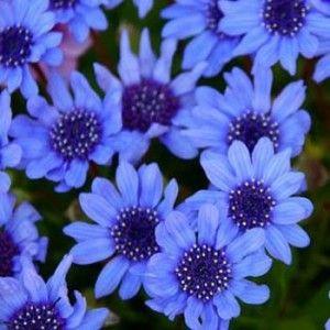 Ten Proven Blue Flowers which will brighten up your garden