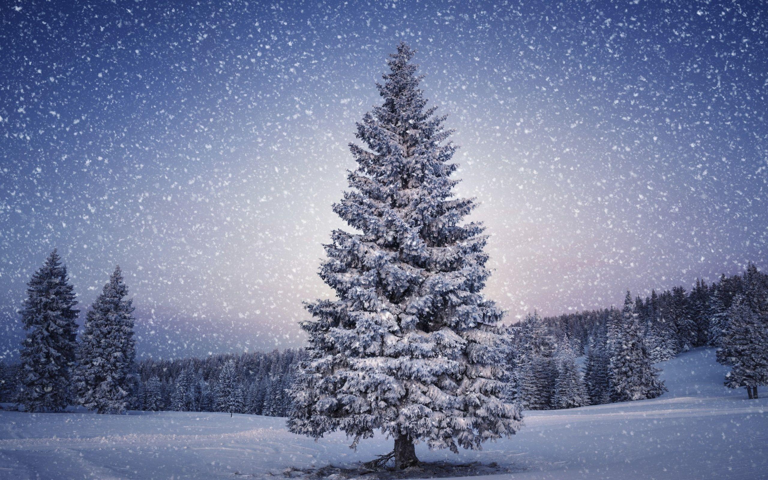 Snowy Trees Wallpaper