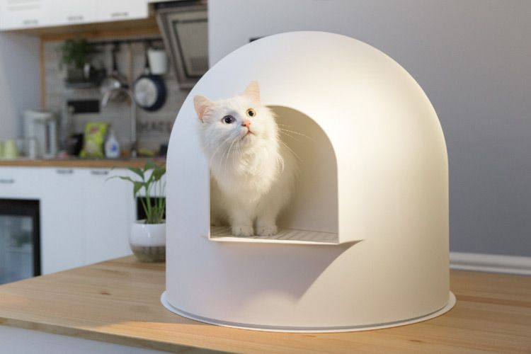 Buy The Best Hooded Igloo Cat Litter Box From Pidan Studio Cat Litter Box Cat Training Litter Box Litter Box