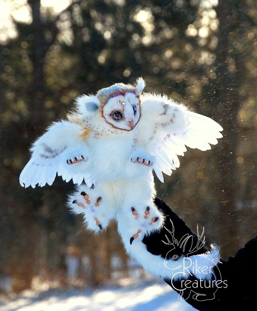 Fantasy Owl Griffin Riker Creatures Fantasy Art Dolls Fantasy Creatures Art Cute Fantasy Creatures