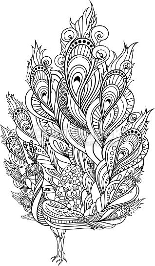 Zentangle Peacock Coloring Page Vector Tribal Decorative Isolated Bird On Transparent Background