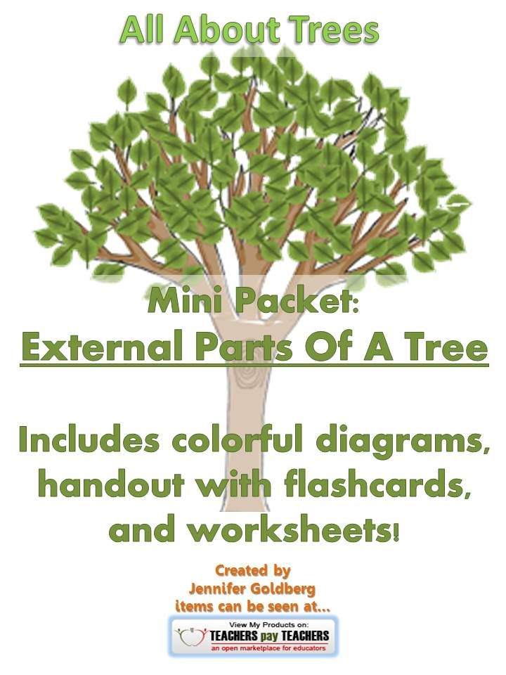 All About Trees Mini Packet External Parts Of A Tree Pinterest