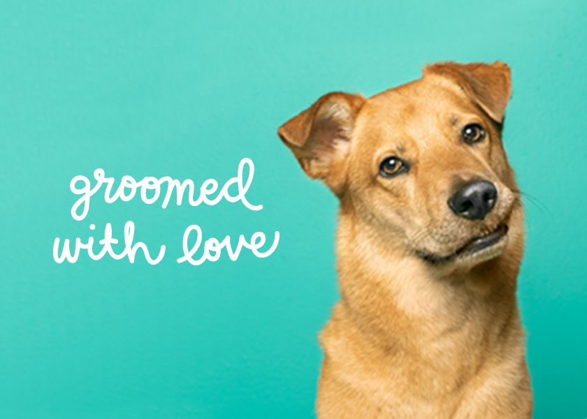Meet Pets We Groomed With Love Kitten Grooming Dog Nails Cat Groomer