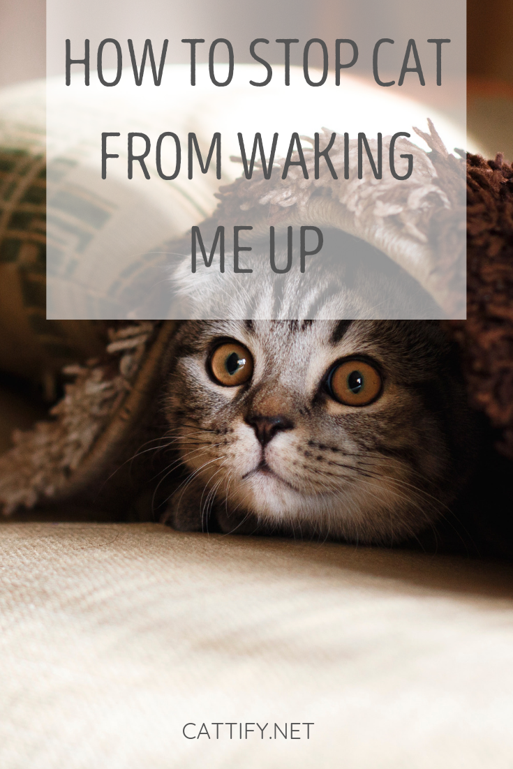 Simple Solutions To Stop A Cat From Waking You Up