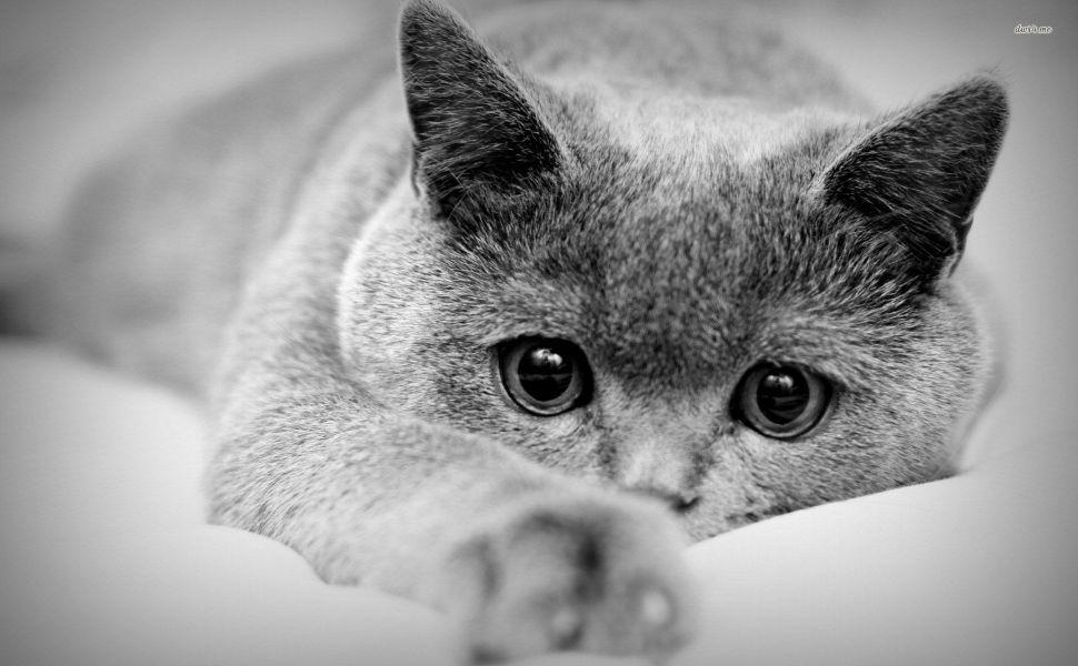 Cute Cat In Black And White HD Wallpaper