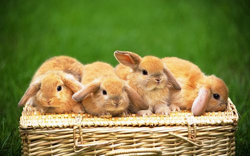 Pin By Shirley Varner On Bunnies Cute Animal Pictures Cute Animals Baby Animals