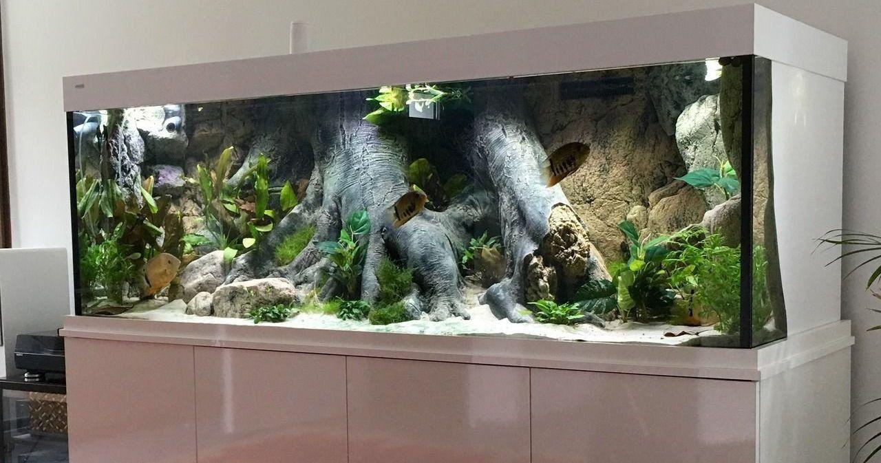 Aquarium Decoration Ideas Freshwater Beautiful Amazon Themed
