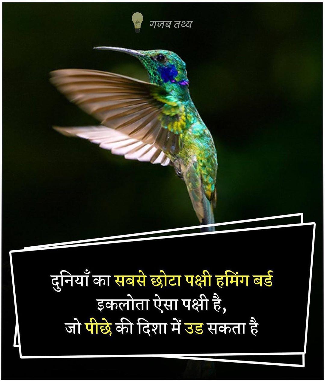 Pin by Rinku Singh on रोचक तथ्य(Rochak Tathya) | Some