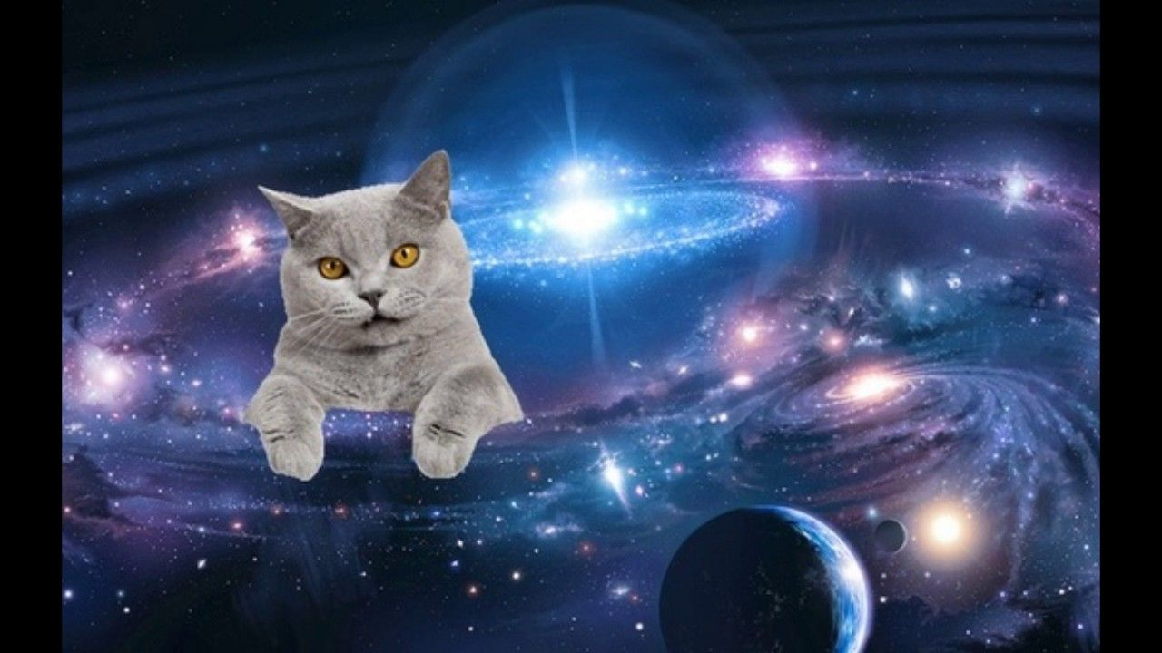 Explore Galaxy Cat Space Cat And More