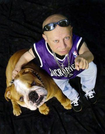English Bulldog Puppies For Sale Suburbanbullies Com Pets
