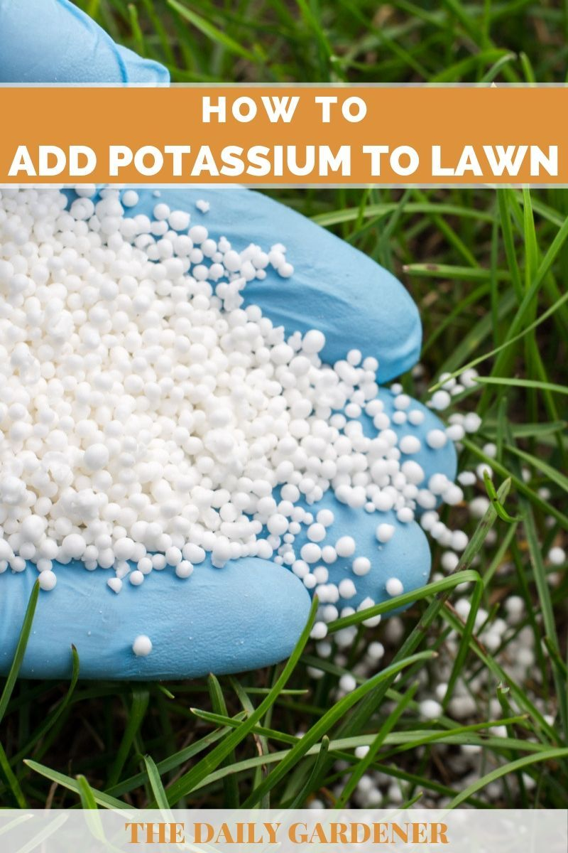 How to add potassium to your lawn in 2020 grass