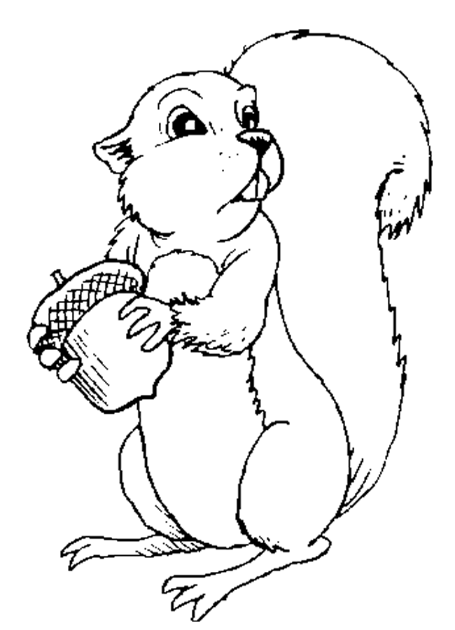 Squirrel Template - AZ Coloring Pages | color pages ...
