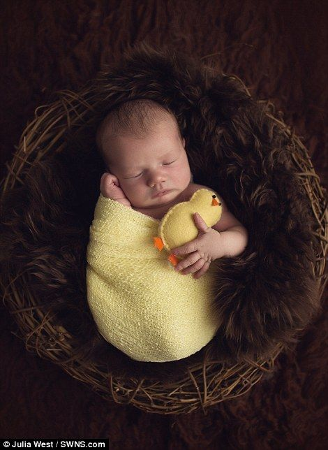 Photographer Julia West's Easter-themed photos show newborn babies dressed as animals | Daily Mail Online