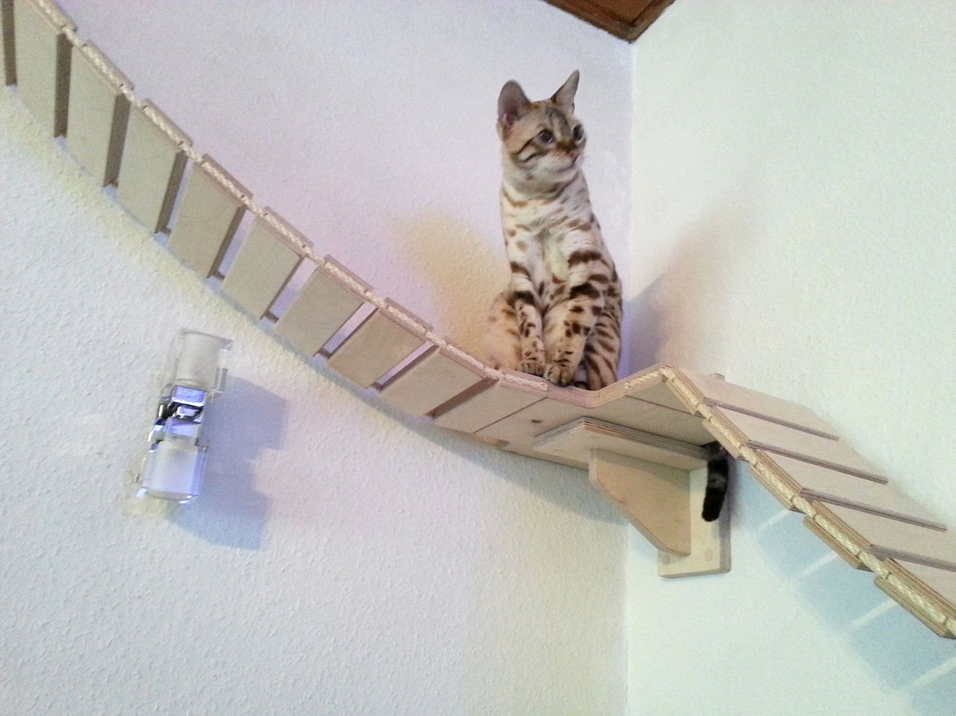 King Of The Indoor Jungle Jungle Gym For Felines