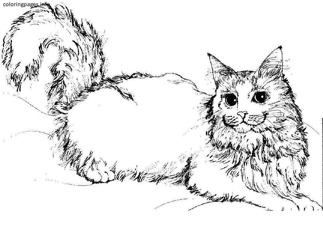 Detailed Cat Coloring Pages Cat Coloring Page Coloring Pages Animal Coloring Pages