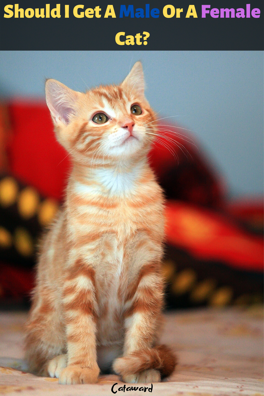 Tips For Adopting A Kitten In 2020 Kitten Adoption Cat Parenting Cat Care