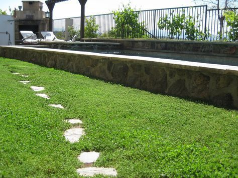 Drought Dogs And Gophers Oh My Clover Lawn Drought Tolerant Landscape Design Lawn Alternatives