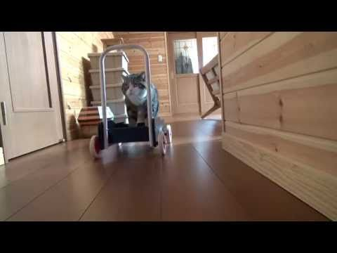 押すねこ。-A pushcart and Maru.- - YouTube
