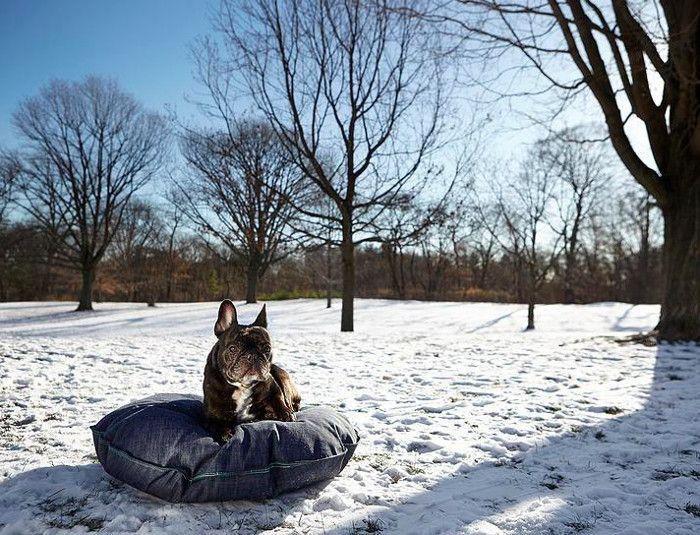 Denim Dog Beds from DEN