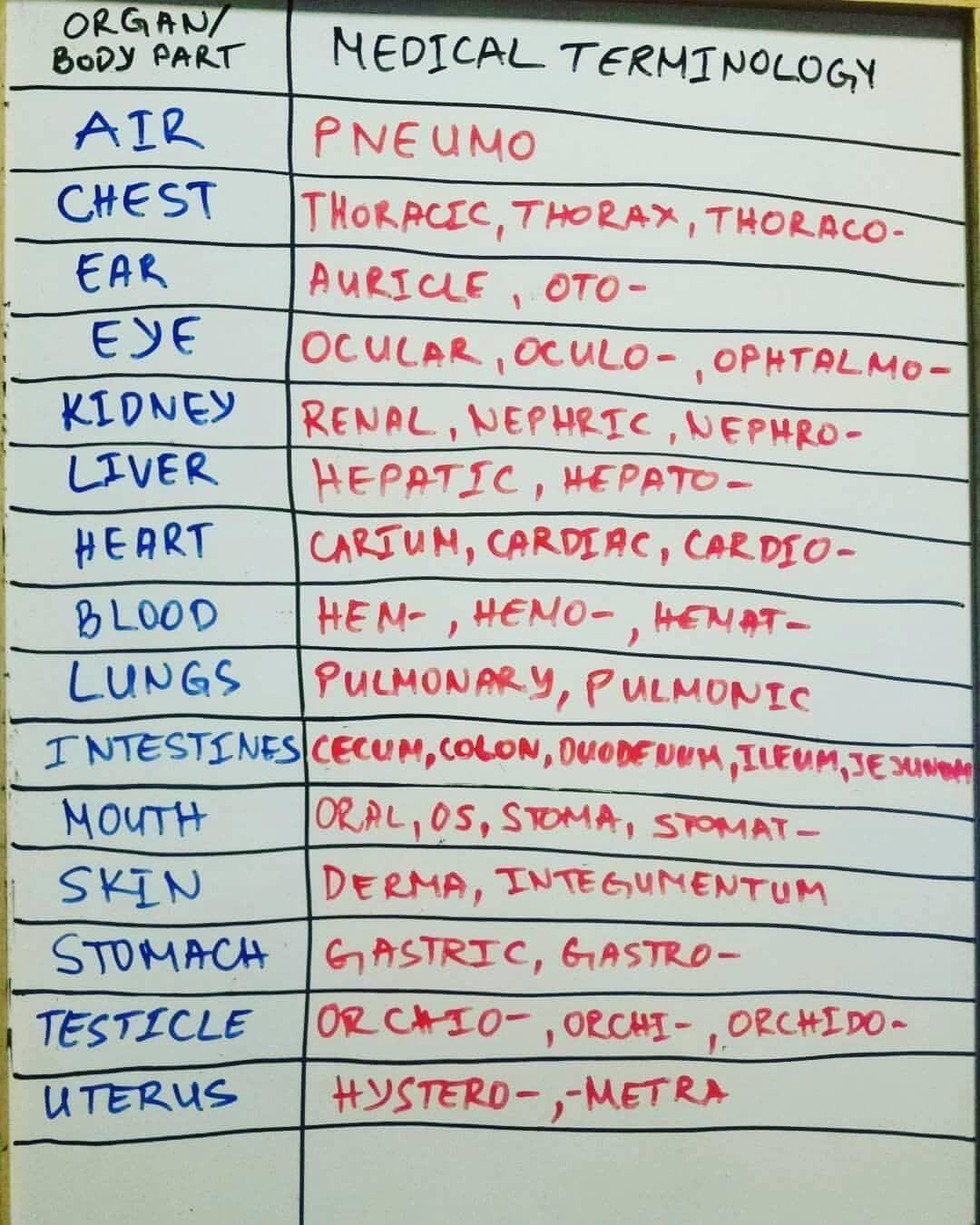 Organ And Its Medical Terminology Used Followforupdates