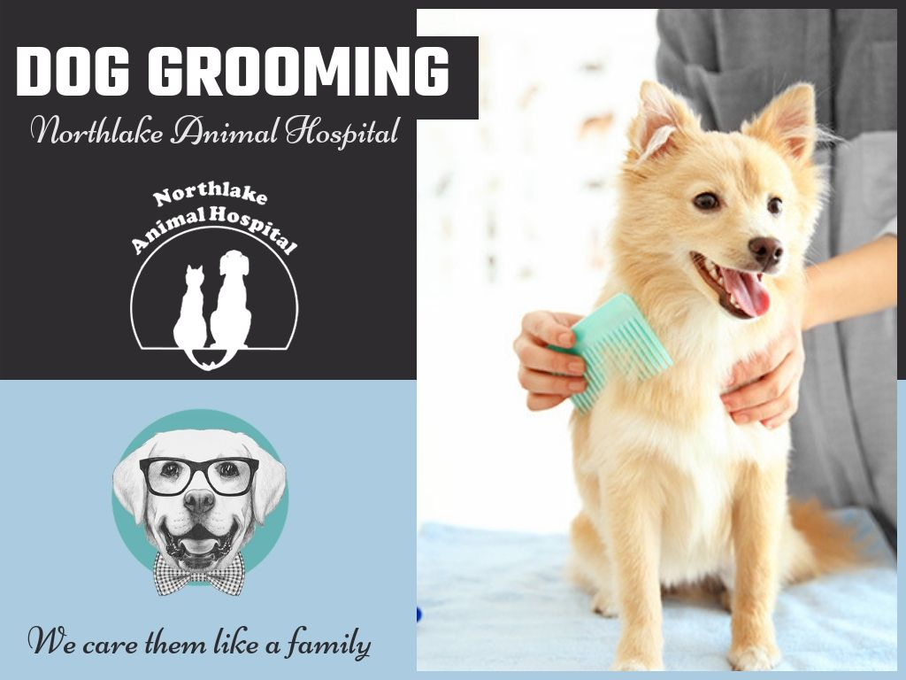 We Have The Professionally Trained Dog Groomers For Your Convenience Also We Not Only Want Your Pet To Feel Fresh And Clean Bu Dog Grooming Dogs Pets