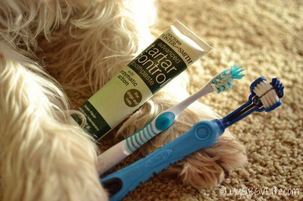 Cats Best Food #CatsWhichLookLikeHitler | Dog teeth ...