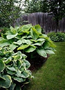 Truly Huge Hostas Sum And Substance Sum Of All Titanic