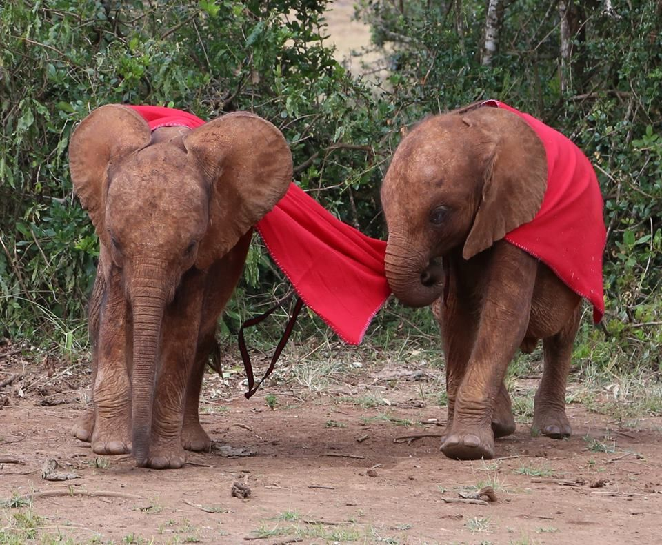 DSWT Orphans getting ready for the Oscars.