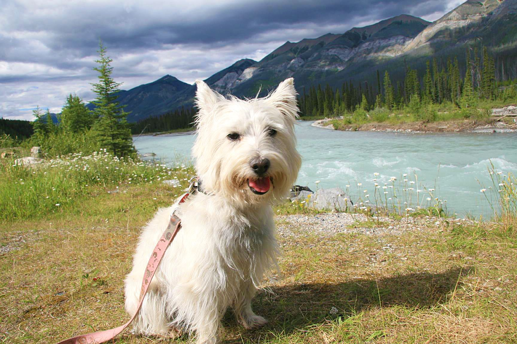 Poochi In Beautiful Alberta Canada Alberta Canada