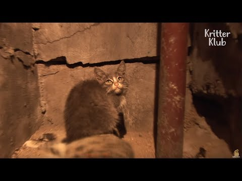 Kitten Takes Care Of Her Mom S Corpse Animal In Crisis Ep18 Youtube